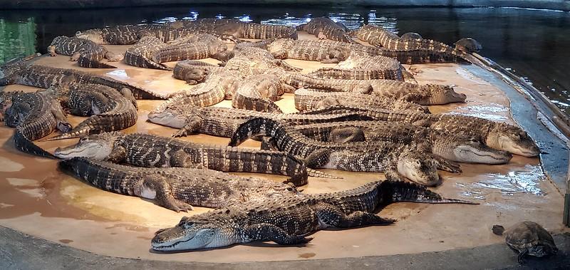 SC, Hamer - Reptile Lagoon, 2019