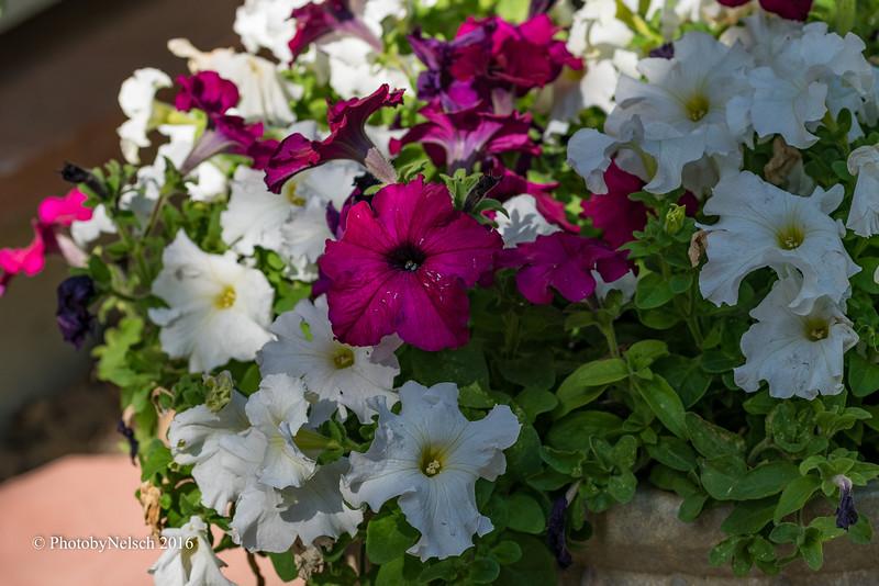 Don Egan's Flowers -147.jpg