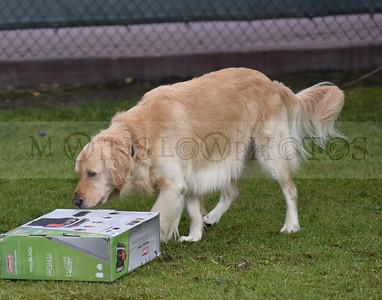 3-3-18 Dog 21