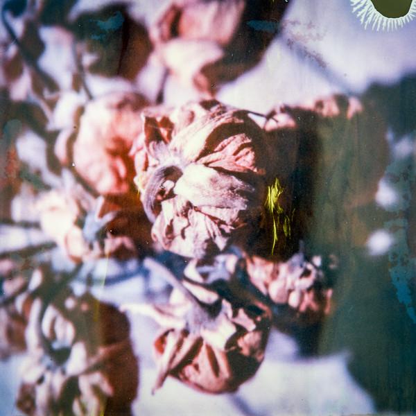 polaroid-glass-flowers011.jpg