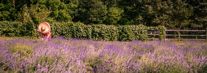 Mike Maney_Lavender Farm-16.jpg