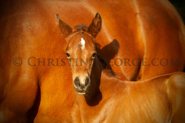 Fern Lindsay 's filly