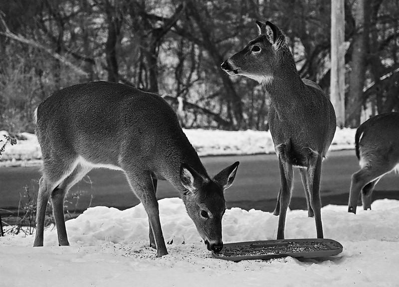 01-29-2021-deer.jpg