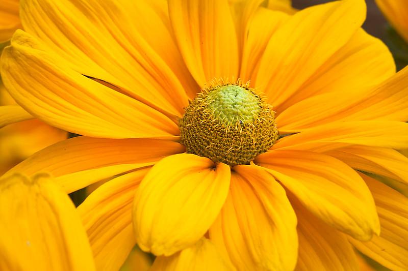 Botanicgarden12-0934.jpg
