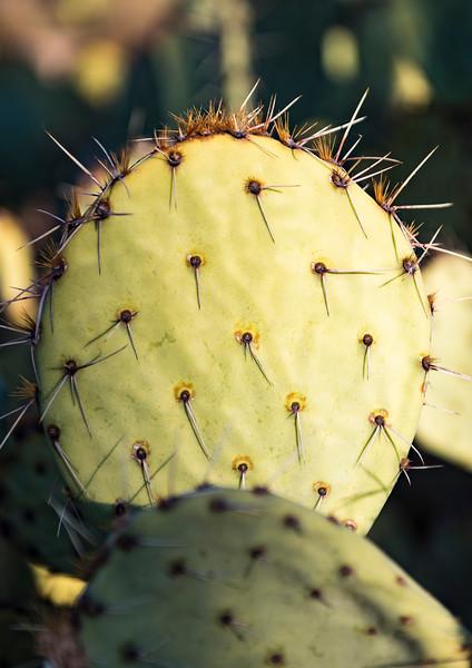 Arizona_090617_0936.jpg