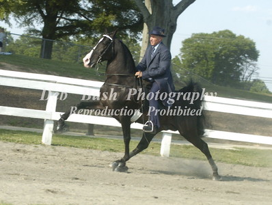 CLASS 6  AMATEUR OWNED & TRAINED SPEC