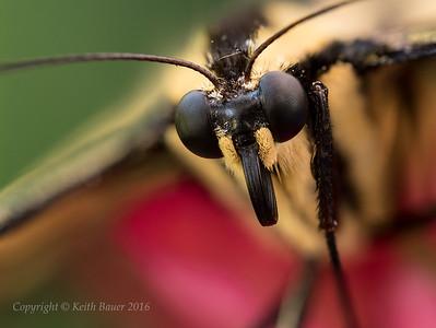 Macro and Close Up Photography