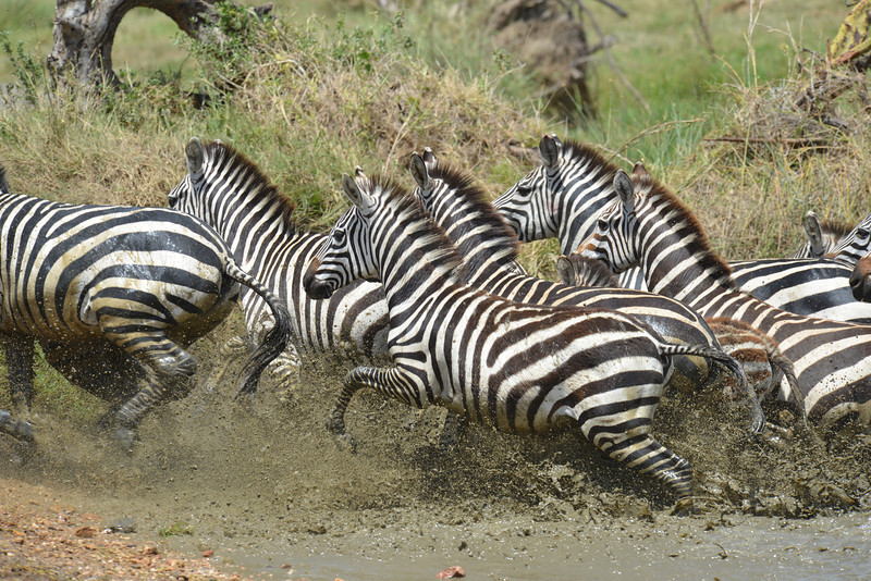 East Africa Safari 342.jpg