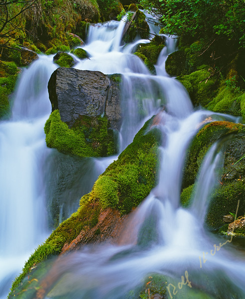 Waterfall flowing through a rain forest on Vancouver Island, British Columbia, Canada