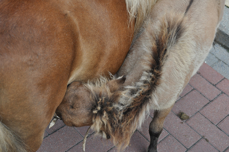 2011-08-07 1 kermis in de Borgt.JPG
