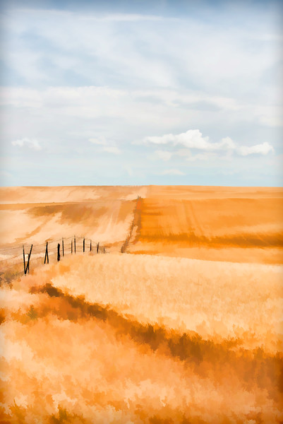 Fields Of Gold 003 | Wall Art Resource