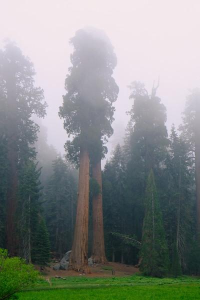 California Day 6 Sequoia 05-30-2017 117.JPG