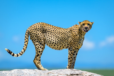 Tanzania '18