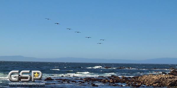 Monterey CA June 2014