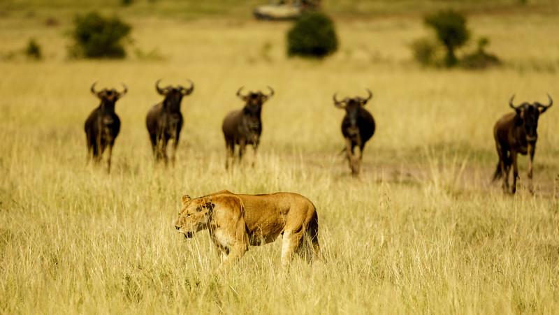 Kenya 2015-03612.jpg
