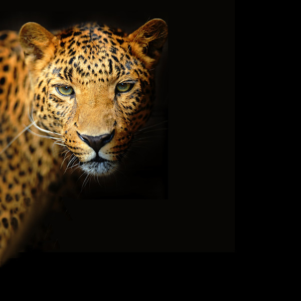 littleliaisons leopard 10x10.jpg