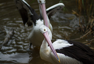 Melbourne Zoo, 2013