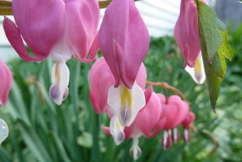 Joys Flowers.jpg