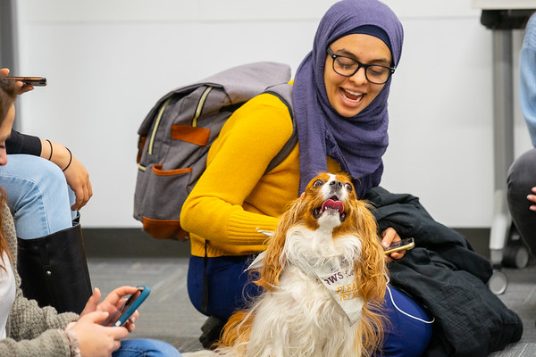190389 Libraries, UB Libraries Stress Relief, Therapy Dogs, Silverman Library, Capen Hall