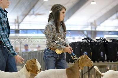 Market Goat Ringshots