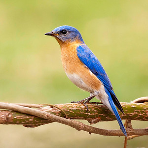 Square Birds