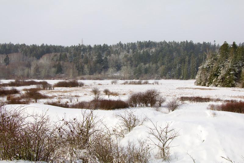 Winter on Island View Salt Marsh