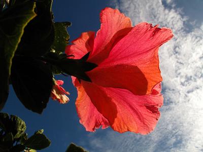G10 Flowers - 2008 10 25