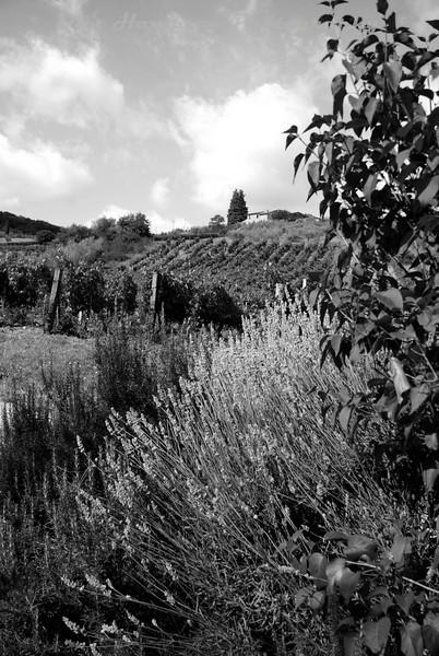 Tuscany_780 b&w.jpg