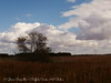 Fall Trees and Tall Grass