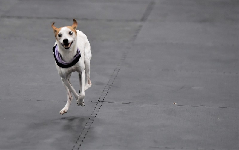 dogshow11.jpg