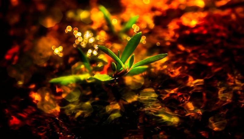 The Magic of Light-230.jpg