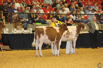 WDE Red Holstein Hfrs 2016