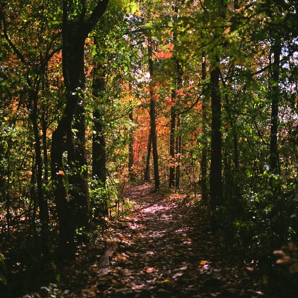 Autumn Hike 120 Film-00026.jpg