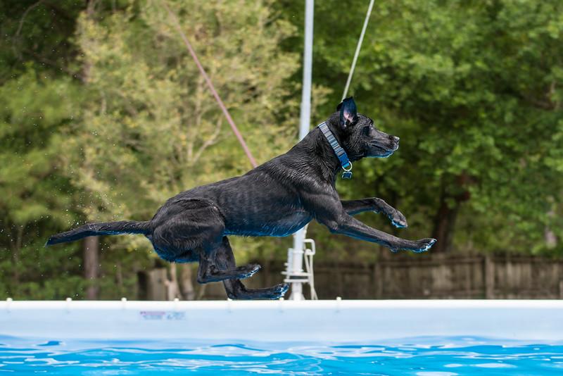 Dock Diving Practice