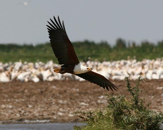 EastAfrica-Other FlyingThings