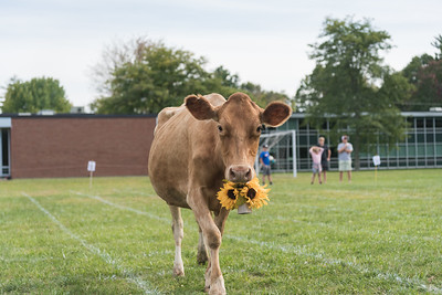2018 Cow Maneuver