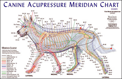 PETS_acupuncturepoints-1.jpg