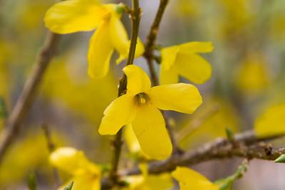 set 1 April flowers 2011