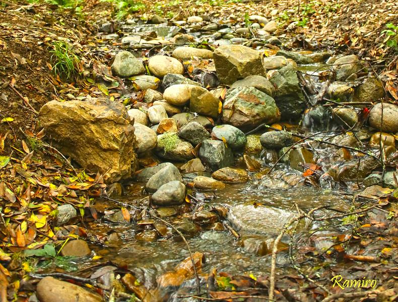 Muir Woods IMG_3689.jpg