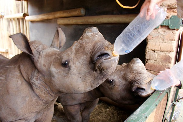 2016 South Africa Care for Wild Africa Rhino Sanctuary