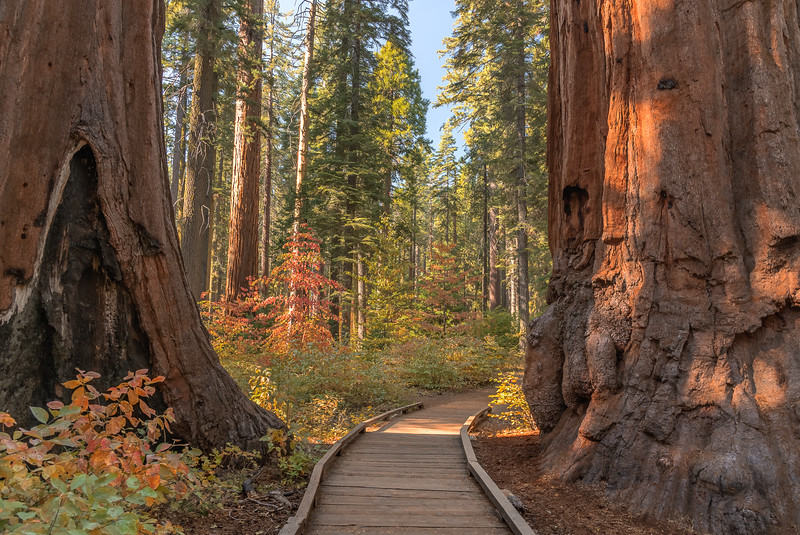 Journey Through the Trees