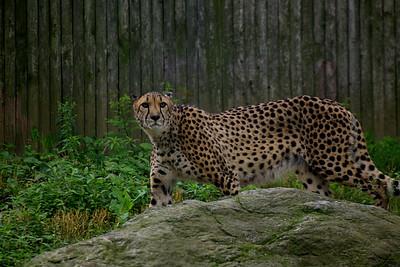 Zoo 6 23 09