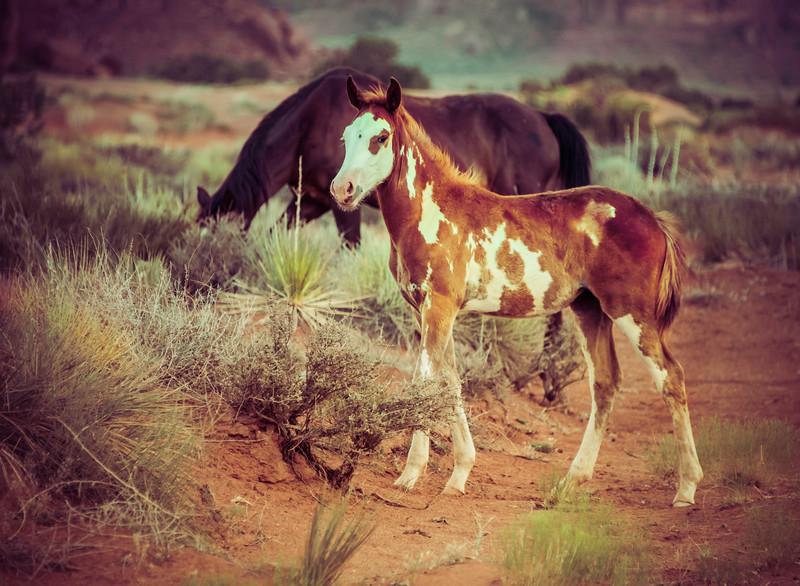Monument Valley Horses.jpg