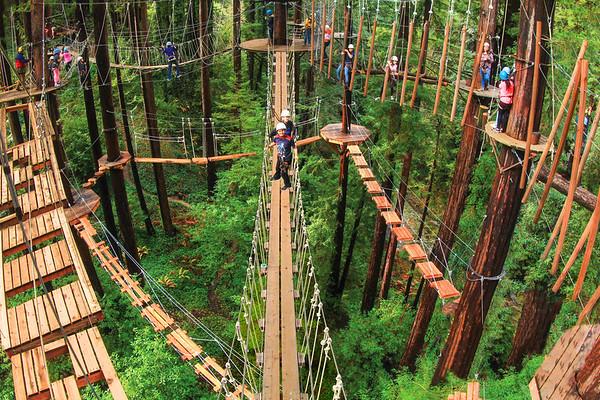 2016 Sequoia