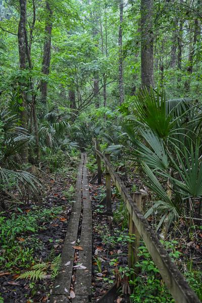 NE FLORIDA Hoffmans Crossing.jpg