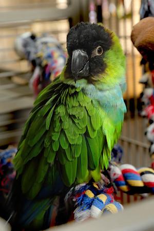 Arizona Exotic Bird Rescue