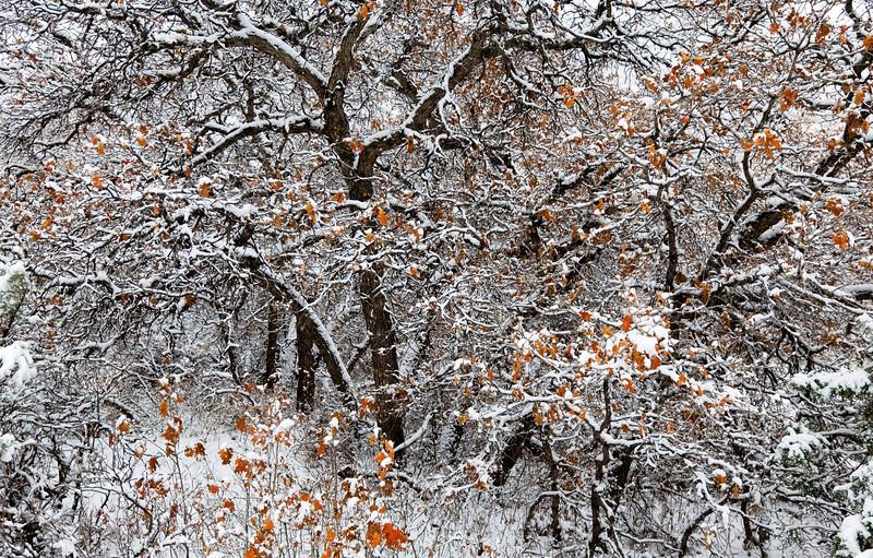 snowy trees final.jpg