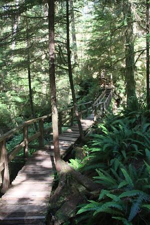 Day 12 - Tofino Rainforest Trail