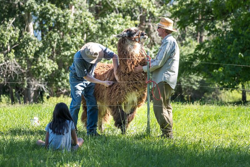 Jay Waltmunson Photography - Wallowa Llamas Reunion - 001.jpg