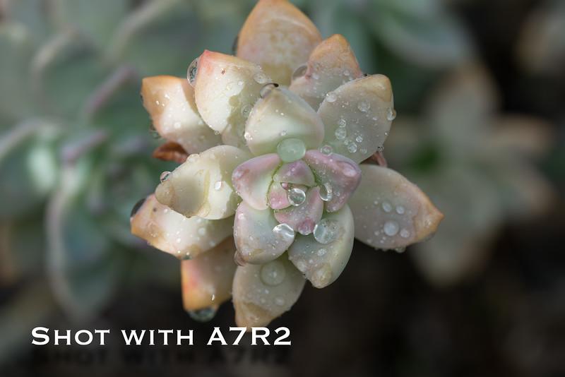 A7R2 Macro Comparison-5.jpg
